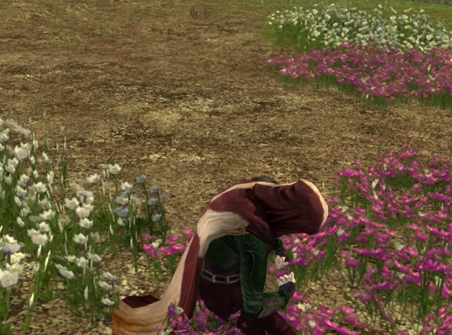 I'm gonna make a nice bouquet for the inn-keeper lady